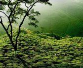 10 điểm đến đẹp nhất của du lịch Ấn Độ