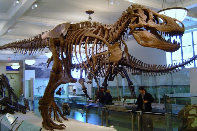 american-museum-of-natural-history-1