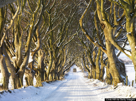Dark Hedges, Stranocum, Ballymoney, County Antrim, Northern Ireland