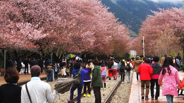 130408123341-south-korea-blossom-gallery-6-horizontal-large-gallery_resize